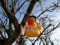 San Franny Rubber Duck