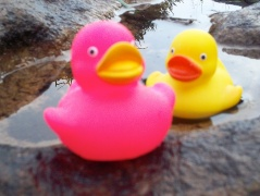 The Twin Rubber Duckies, Pinky and Perky