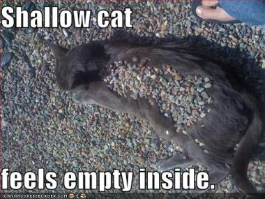 Empty Inside LolCat