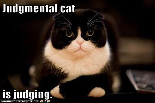 judgemental-cat-isjudging-lolcat