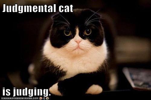 judgemental-cat-isjudging-lolcat