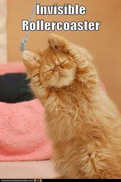 LOLcat invisible rollercoaster