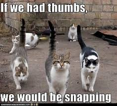 LOLcat snapping cat pack