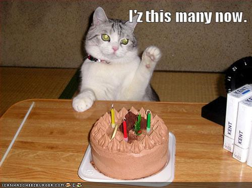 LOLcat birthday
