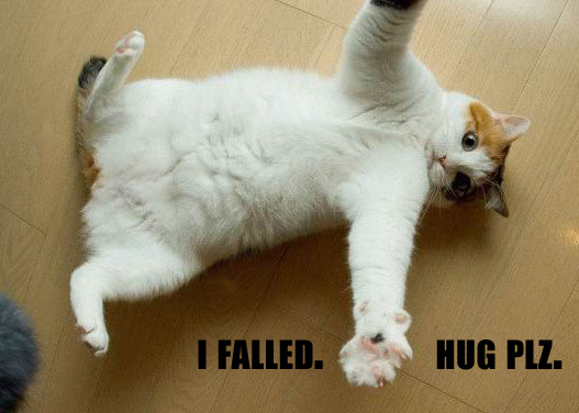 lolcat-failed-hugs