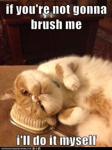 if you're not gonna brush me, i'll do it myself