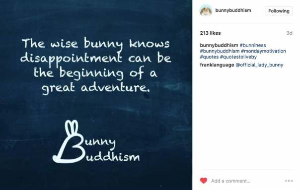Bunny Budhism