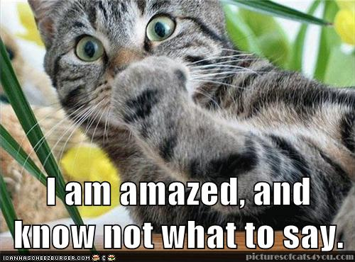 LOLcat amazed